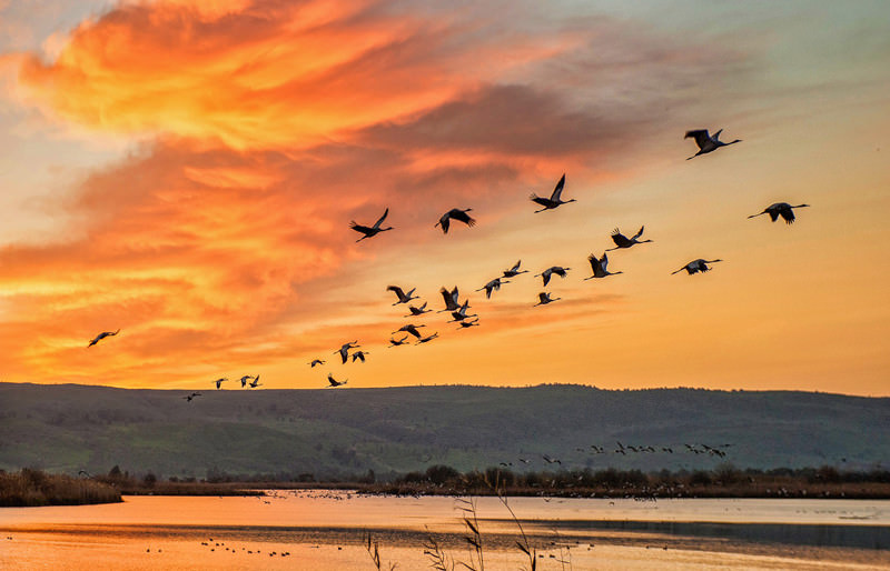 shutterstock_170112044_birds